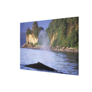 North America, USA, Alaska, Inside Passage. Stretched Canvas Prints