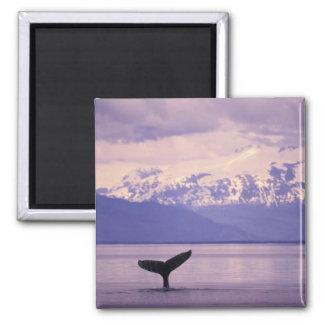 North America, USA, Alaska, Inside Passage. Magnet