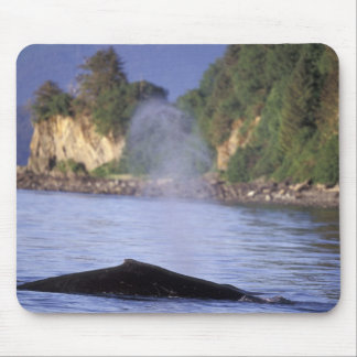 North America, USA, Alaska, Inside Passage. Mouse Mat