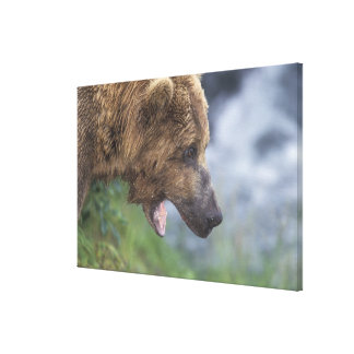 North America, USA, Alaska, Katmai NP, Brooks Gallery Wrapped Canvas