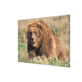 North America, USA, Alaska, Kodiak Island, Canvas Print