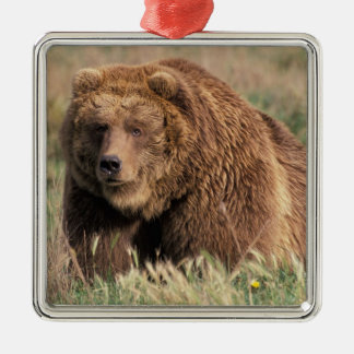 North America, USA, Alaska, Kodiak Island, Christmas Ornament