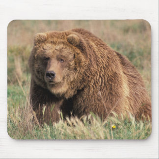 North America, USA, Alaska, Kodiak Island, Mouse Mat