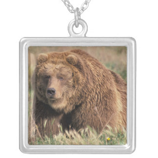 North America, USA, Alaska, Kodiak Island, Silver Plated Necklace