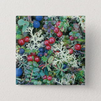 North America, USA, Alaska, Landscape, berries 15 Cm Square Badge