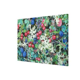 North America, USA, Alaska, Landscape, berries Stretched Canvas Print