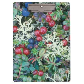 North America, USA, Alaska, Landscape, berries Clipboard
