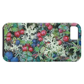 North America, USA, Alaska, Landscape, berries iPhone 5 Cases