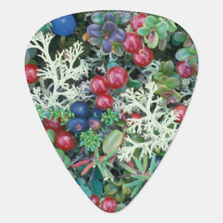 North America, USA, Alaska, Landscape, berries Plectrum