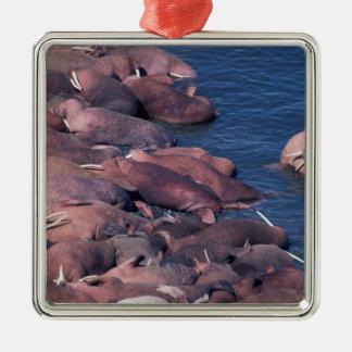 North America, USA, Alaska, Round Island, Christmas Ornament