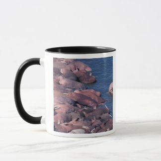 North America, USA, Alaska, Round Island, Mug