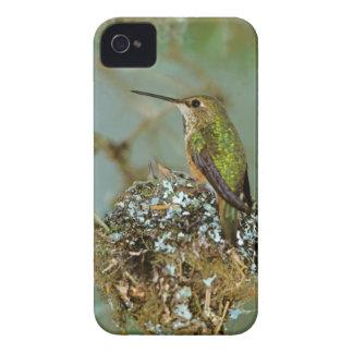 North America, USA, Alaska. Rufous Humming bird iPhone 4 Case