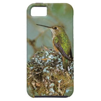 North America, USA, Alaska. Rufous Humming bird Case For The iPhone 5