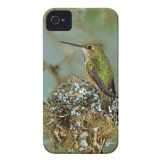 North America, USA, Alaska. Rufous Humming bird iPhone 4 Case
