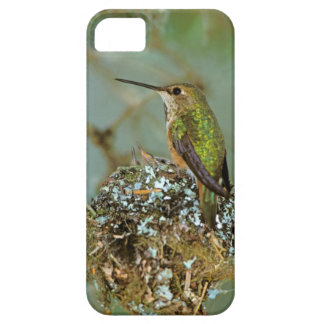 North America, USA, Alaska. Rufous Humming bird iPhone 5 Case