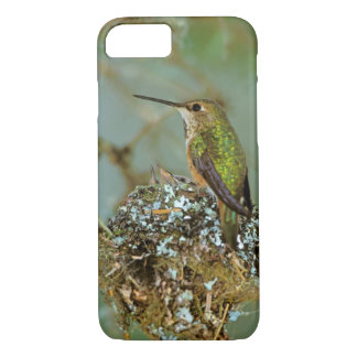 North America, USA, Alaska. Rufous Humming bird iPhone 7 Case