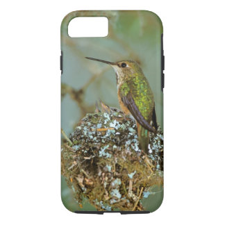 North America, USA, Alaska. Rufous Humming bird iPhone 8/7 Case