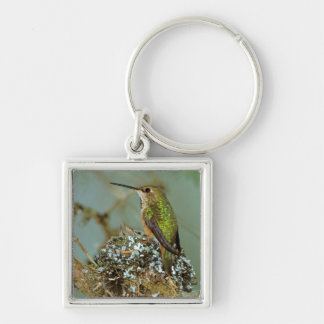North America, USA, Alaska. Rufous Humming bird Silver-Colored Square Key Ring