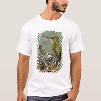 North America, USA, Alaska. Rufous Humming bird T-Shirt