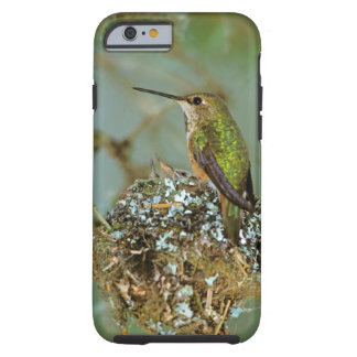 North America, USA, Alaska. Rufous Humming bird Tough iPhone 6 Case