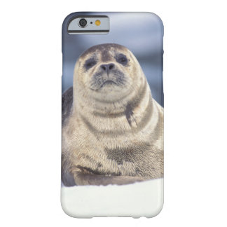 North America, USA, Alaska, S.E., Le Conte Barely There iPhone 6 Case