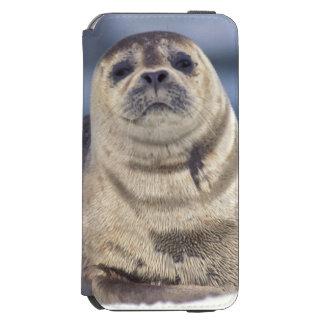 North America, USA, Alaska, S.E., Le Conte Incipio Watson™ iPhone 6 Wallet Case