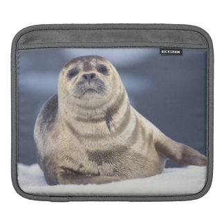 North America, USA, Alaska, S.E., Le Conte iPad Sleeve