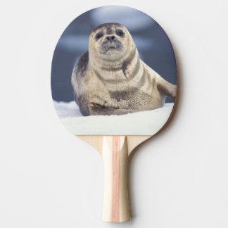 North America, USA, Alaska, S.E., Le Conte Ping Pong Paddle