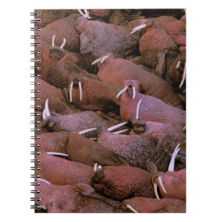 North America, USA, Alaska, Yukon Delta National Notebook