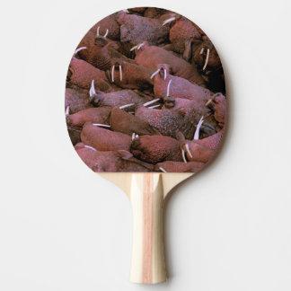 North America, USA, Alaska, Yukon Delta National Ping Pong Paddle