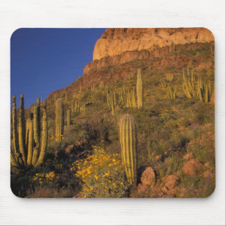 North America, USA, Arizona, Organ Pipe Cactus 2 Mouse Mat