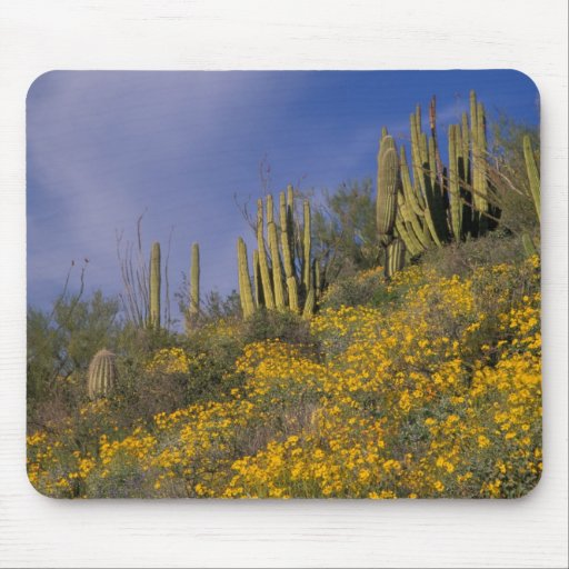 North America, USA, Arizona, Organ Pipe Cactus Mouse Pads