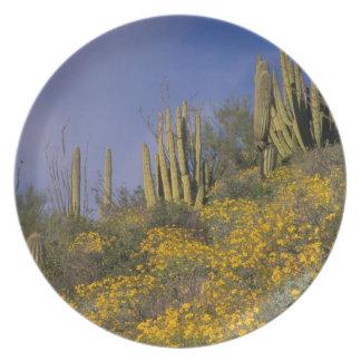 North America, USA, Arizona, Organ Pipe Cactus Plate