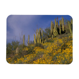 North America, USA, Arizona, Organ Pipe Cactus Rectangular Photo Magnet