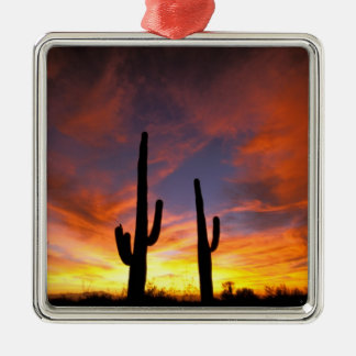 North America, USA, Arizona, Sonoran Desert. Christmas Ornament