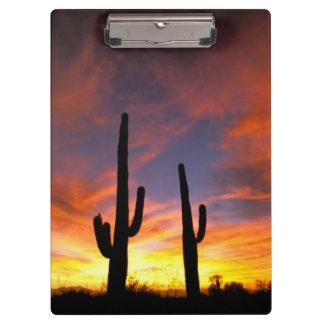 North America, USA, Arizona, Sonoran Desert. Clipboards