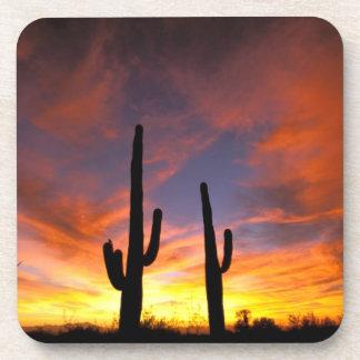 North America, USA, Arizona, Sonoran Desert. Drink Coasters