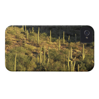 North America, USA, Arizona, Sonoran Desert iPhone 4 Case-Mate Cases