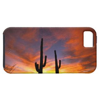 North America, USA, Arizona, Sonoran Desert. iPhone 5 Cases