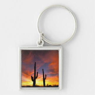 North America, USA, Arizona, Sonoran Desert. Key Ring