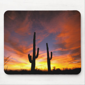 North America, USA, Arizona, Sonoran Desert. Mouse Mat