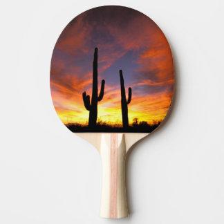 North America, USA, Arizona, Sonoran Desert. Ping Pong Paddle