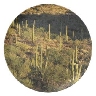 North America, USA, Arizona, Sonoran Desert Plate