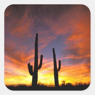 North America, USA, Arizona, Sonoran Desert. Square Sticker