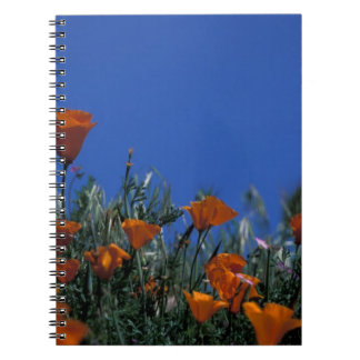 North America, USA, California, Antelope Valley, 3 Notebooks