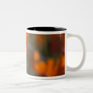 North America, USA, California, Antelope Valley, Two-Tone Coffee Mug
