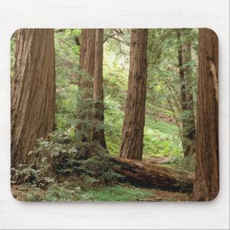 North America, USA, California, Big Sur, Mouse Pad