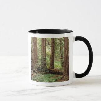 North America, USA, California, Big Sur, Mug