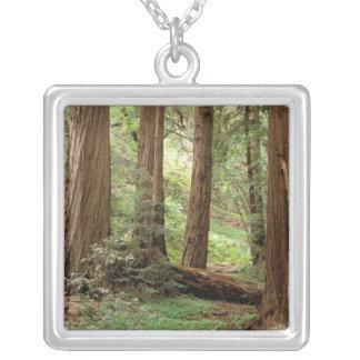 North America, USA, California, Big Sur, Silver Plated Necklace