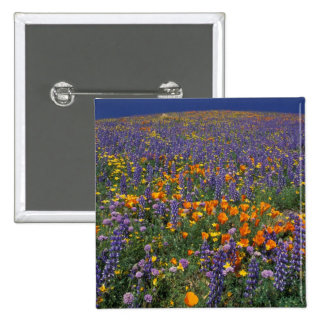 North America, USA, California, Los Angeles 2 15 Cm Square Badge